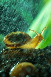 风雨中倔强的小蜗牛