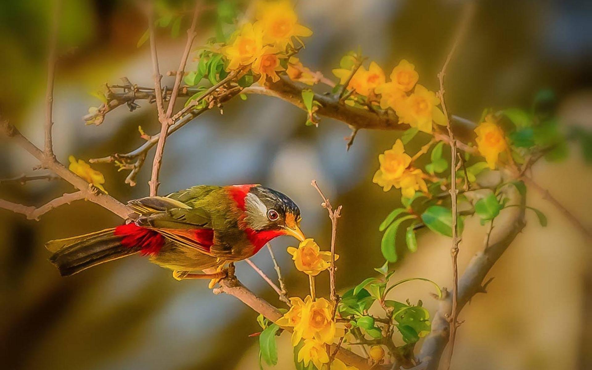 精致可爱小鸟—动物图片—美图美秀